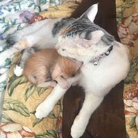 母猫が子猫を舐めてる時に子猫が噛んだり抵抗したり暴れたりすると母猫が子猫のことを噛んでしまいます。子猫が痛そうに鳴くのでいつか噛み殺しちゃうんじゃないかと心配です。どうすれば良いのでしょうか