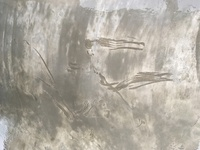 コンクリートの施工ミスについて 工務店経由で業者に駐車場の土間コンクリートを依頼したのですが足跡や太い線が入っていて仕上がりがあまりにも酷いです。(写真参照) 太い線の部分は触るとザ ラザラしています...