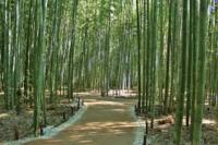 京都の歴史の質問。 京都に平安宮と言う皇居(霞が関)が江戸時代まで有って、別に西暦1300年頃に京都御所が建設されたと言う事で良いですか? 私は京都御所に桓武天皇以降が住んでいたのかと思っていました...