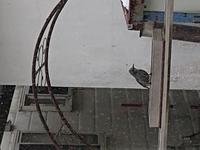 北海道道東です。こちらの画像の野鳥は何でしょうか?尾は長めです。  見えづらいですが宜しくお願いいたします。
