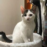 多頭飼育崩壊している家庭から引き取った猫ちゃんです。なんの猫の種類が混ざっているか、わかる方いますか??