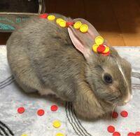 この画像のウサギは、なんという種類のウサギですか?