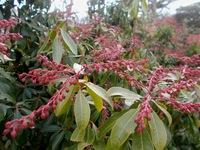 写真の赤い植物の名称をご存知の方教えて頂けませんか?