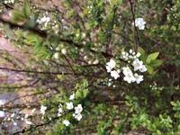 ショッピングモールに咲いてた花の名前を知りたいです。  画像の花ですが、高さ60〜70くらいの高さの枝に咲く花でした。  よろしくお願いします。