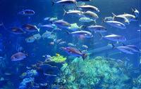 魚に詳しい人に質問します。 画像の魚の名前を教えてください。 大変恐縮ですが見える範囲の魚の名前を全て教えていただきたいです。