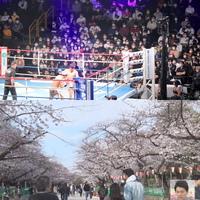 日本人の新型コロナに対するズレた危機感で素朴な質問です。  新型コロナウイルスの感染拡大への懸念が世界的に強まる中、東京の桜が3月22日に満開になった。 好天に恵まれた3連休は、各地で家族連れやカップル...