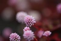 自宅近所に咲いています。なんという名前の草花でしょうか?
