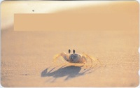 このカニの名前を教えてください。 Google画像検索をすると「シオマネキ」と出ますが、どう見てもシオマネキには見えません。 が、やっぱりシオマネキなのでしょうか。