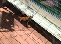 蜂の種類、わかりますか??