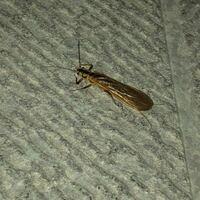 写真の虫さんについてです。 家の中にいたのですぐ逃したのですが、何という名前の虫さんだったのか知りたいです。  体長は4cmくらいだったと思います。 暴れたりせずおとなしかったです。 可愛くはありませんで...