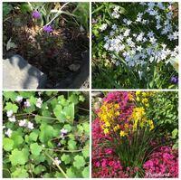 この花の名前を教えてください。 1 左上の紫色の花 2 右上の白い尖った花 3 左下の薄紫色の花 4 右下の黄色い花 宜しくお願いします^_^