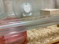 ジャンガリアンハムスターのオスを飼い始めて6日なのですが、プラスチック噛んで舐めています。噛むのを辞めさせる方法はありませんか? ゲージを良く噛んでいます。