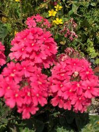 花の名前と花言葉わかる方おられますか?