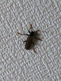 至急 虫 判別 画像あり こいつの ・名前(とできれば分類) ・益虫か害虫か何もしないか ・処分すべきか ・処分時の注意点 を教えていただきたいです。  左後脚が折れてるみたいです。