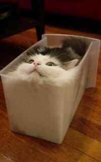 貴方は猫派?犬派ですか? わたしは猫派です