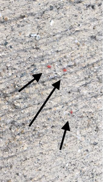 コンクリートの上でよく見るこの赤い小さな虫はなんですか?