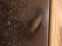 カブトムシ の幼虫について教えてください。 カブトムシ の幼虫を知り合いからいただき初めて育てています。 現在写真のような状態で、蛹室狭いように見えますが、大丈夫でしょうか。見えてい ないところで広く...