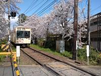 京都の世界遺産仁和寺で拝観が再開されました。 今年は御室桜の拝観も自粛で仁和寺境内は閑散としていました。 そろそろ萎縮から解放されて京都観光の再開と思います。 ところで、仁和寺の道 を挟んで前の空き地はどうなるの?