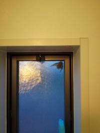 コウモリが、風呂場の網戸に張り付いています。 今、シャワーのお湯(60℃)をかけても、コウモリは張り付いたまま…  あまり長くやって、死んでしまっても…と思い、30秒くらいで諦めましたが。  何か気持ち悪くて...