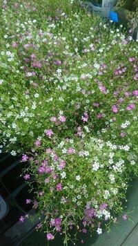 植物にお詳しい方、画像の植物の名前を教えてください!どうぞよろしくお願い致します。
