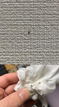 最近小さな羽虫が家に出ます。 大きさが2,3ミリ程度なので、写真で撮りましたが小さくてなんという虫なのかわかりません… コバエなのか、もしくはイガ?なのか、全然わかりません… 虫の名前 や駆除方法など、ご存知の方がいたら教えて欲しいです。  写真は天井のLED電気の横辺りに止まっていたものと、ティッシュでとって少しつぶしてしまったものになります。