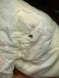 この2週間このような少し大きいサイズのアリ?のような虫が1日1匹以上部屋の中に出現していて困っています。 この虫の正体や対策等教えていただければ幸いです。