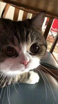 ネコのYouTubeを見ていると、「ニャーニャーニャー」とネコの鳴き声がパソコンやスマホ越しに聞こえると、 決まってウチのニャンズは そばに寄って来てキョロキョロします。  これは、猫あるあるですか?  外で猫...