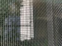 網戸に小さな虫が何匹も付いているのですが、この虫は何かわかる方いらっしゃいますか?また、対策などあればお教え頂きたいです…。
