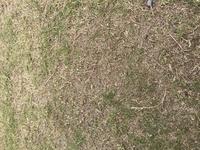 芝生について  昨年庭のドッグランスペースに芝生をひきました! 犬が走ったりするせいもあり密度が低く根っこも見えてます 肥料などもあげてますがなかなかです!  伸びないので芝刈りは してません!  ひいたばかりの時は綺麗だったんですが 写真の様になっている場合植え替えしかないですか?  地域は南東北です  良いアドバイスお願い致します!