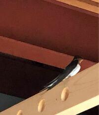 このツバメはオス鳥ですか? それともメス鳥でしょうか。 教えてください。