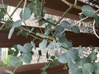 植物に付いているこの虫は害のある虫でしょうか…?