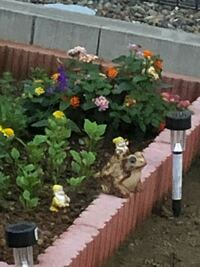 ホームセンターで吊り下げタイプの鉢植えされたランタナが可愛らしくて購入して庭に植えようと思い小さな花壇に植え替えましだか、ランタナは庭に植えてはいけないと知りました。 繁殖力が強く大きくなるそうですが、毎年剪定すればそのままの大きさをキープ出来ますか?それとも抜いた方がいいですか?庭も建売りの為にそんなに広くないので巨大化されたら困るので悩んでます。