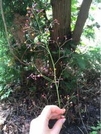 何の植物でしょうか?数年前の9月ごろに道端で見つけた物です。 赤・ピンク・オレンジの三色の丸い蕾がたくさんついていて、とても可愛いです。当時は、「蓬莱の玉の枝ひろったぞ!」と一人ではしゃいでいたので...