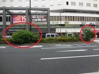 画像は、東京都港区赤坂の外堀通りの中央分離帯でございます。 ・ ご覧のとおり、雑草が「雑木」になっています。 ・ ここで質問です。 このような雑草、「雑木」を刈り取ってくれる行政機関の連絡先が分かれば、教えていただければと思います。 ・ 連絡先の電話番号が分かればよいと思います。