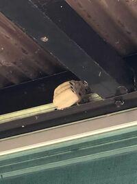何の蜂の巣でしょうか? 駆除方法も分かりましたら教えてください。