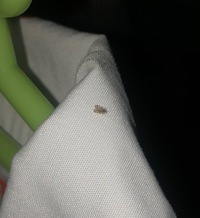 ※虫注意です  ベランダで服を干していると、結構な頻度でこの虫がくっついています。なんの虫かわからない以上、対策もできません  これはなんの虫でしょうか? 教えてください!