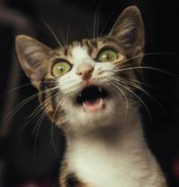 猫は表情豊かじゃありませんか? 動画は猫が一番面白いです。