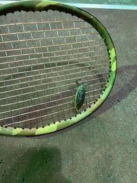 これは何という虫かわかりますか?