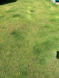 芝生が全く生えてきません。 去年に芝生を植えて今年にサッチング、肥料、エアレーションなどやったのですが全然元気になりません。 どうしたら蘇りますか?よろしくお願いします。