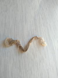 これは、蛇の抜け殻でしょうか? 小さいです。 わかる方いらっしゃいますか?