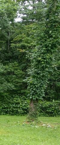 樹木に詳しい方にお聞きしたいです。 子供がキャンプ場にて、恐らくこの樹に触って遊んでいて、手首に薄紫の様な物が付き、洗ったのですが落ちなかったのでそのままにしていました。 キャンプ を行った約1週間...