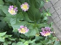 花の名前を教えて下さい。道端に咲いていた可愛い花です。