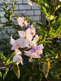 添付画像の花の名前を教えて下さい。本日撮影大阪です。