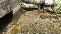 用水路のこの魚は?  夏の間だけ通水される用水路にやってくる この小さな魚の正体を教えてください。 トンネルの出口付近で同じ方向を向いている 小魚たちです。