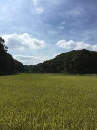 横浜市は面積が広くて名古屋市よりずっと森や田畑や森林が多いのに、人口密度は名古屋市より高いのはなぜですか? 名古屋市で田畑や森林が多い区といえば港区、緑区、守山区などごく僅かですが、横浜市には田畑や森林などの自然が多い区がさらに数多くありますよね?  名古屋市にこんなに田畑や森林が広がっている場所はないですよね?  実際名古屋と横浜の地価はかなり違いますか?