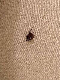 閲覧注意 閲覧注意 閲覧注意 閲覧注意 昨日3〜5cmの羽の生えた虫がトイレにいました。 紙コップと下敷きで捕え外に逃がしましたが これは一体なんの虫だったのでしょうか?
