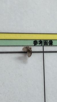 この虫なんですか? もふもふしてます。