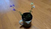 500枚!花の名前を教えて下さい! 実家のベランダの、何も植わっていなかったプランターから突如生えてきた草に、可愛いお花が咲きました。鳥のフンにでも種が入っていたのかしら…? 草花の本 で調べても見つけ...
