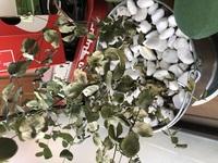 ユーカリの苗を1ヶ月半程前に購入し、鉢植えに入れ替え室内の日当たりの良いところに置いて育てていますが、写真のように枯れ始めています。  対応策を教えていただけたら幸いです。  ユー カリの高さは30センチ前後です。 水は土の渇きを見ながら、一度にコップ半分くらいです。 葉っぱはパリパリになり、触ると落ちてしまうところもあります。 直射日光に当たるところで気温はかなり高くなるとこ...