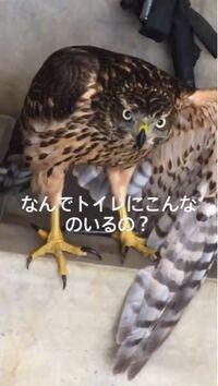 トイレにいたのですがこれなんて鳥ですか?